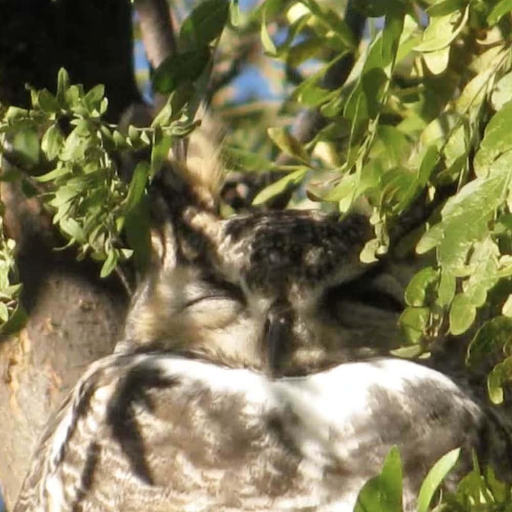 The Wisdom Body Meditation Owl Sleeping Taos New Mexico
